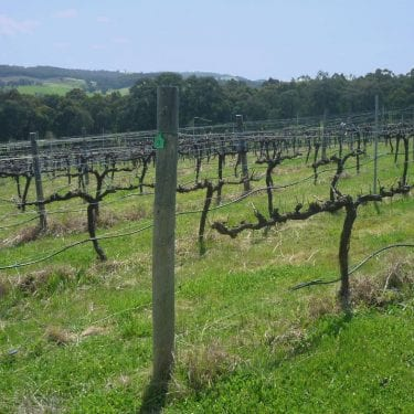 Vineyard monitoring